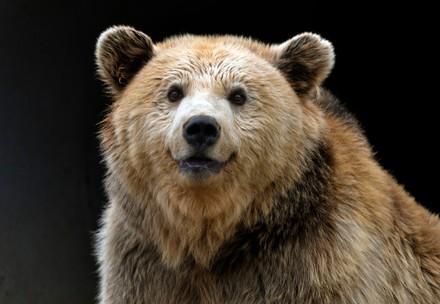 We help bears