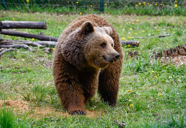 Sylvia from Bear Sanctuary Müritz