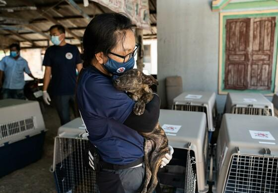 FOUR PAWS Closes Major Slaughterhouse In Cambodia!