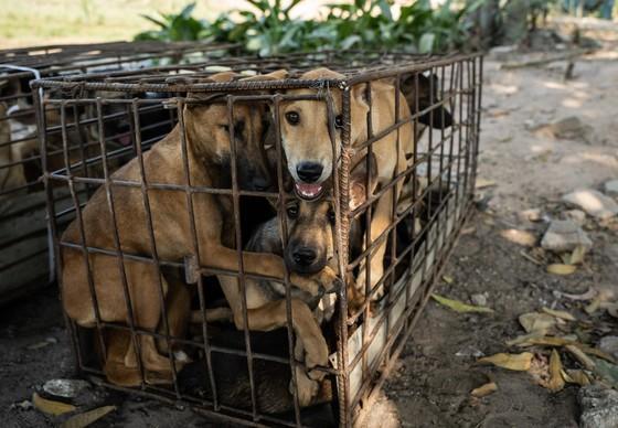 Des chiens souffrent dans une cage