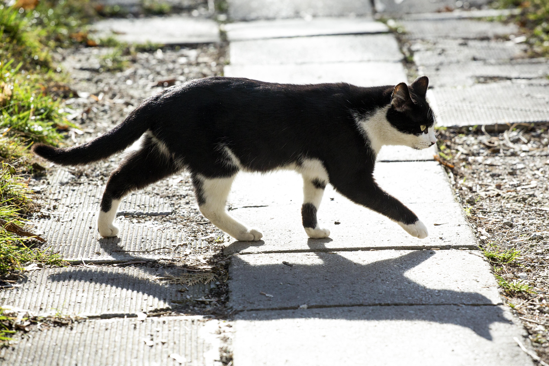 Дива котка на улицата
