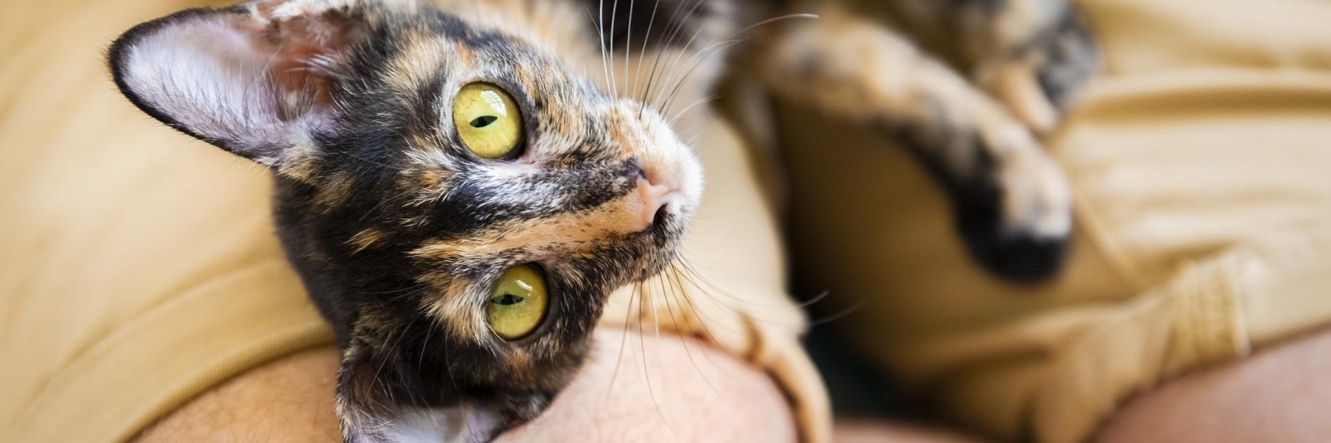 Cat Roxy