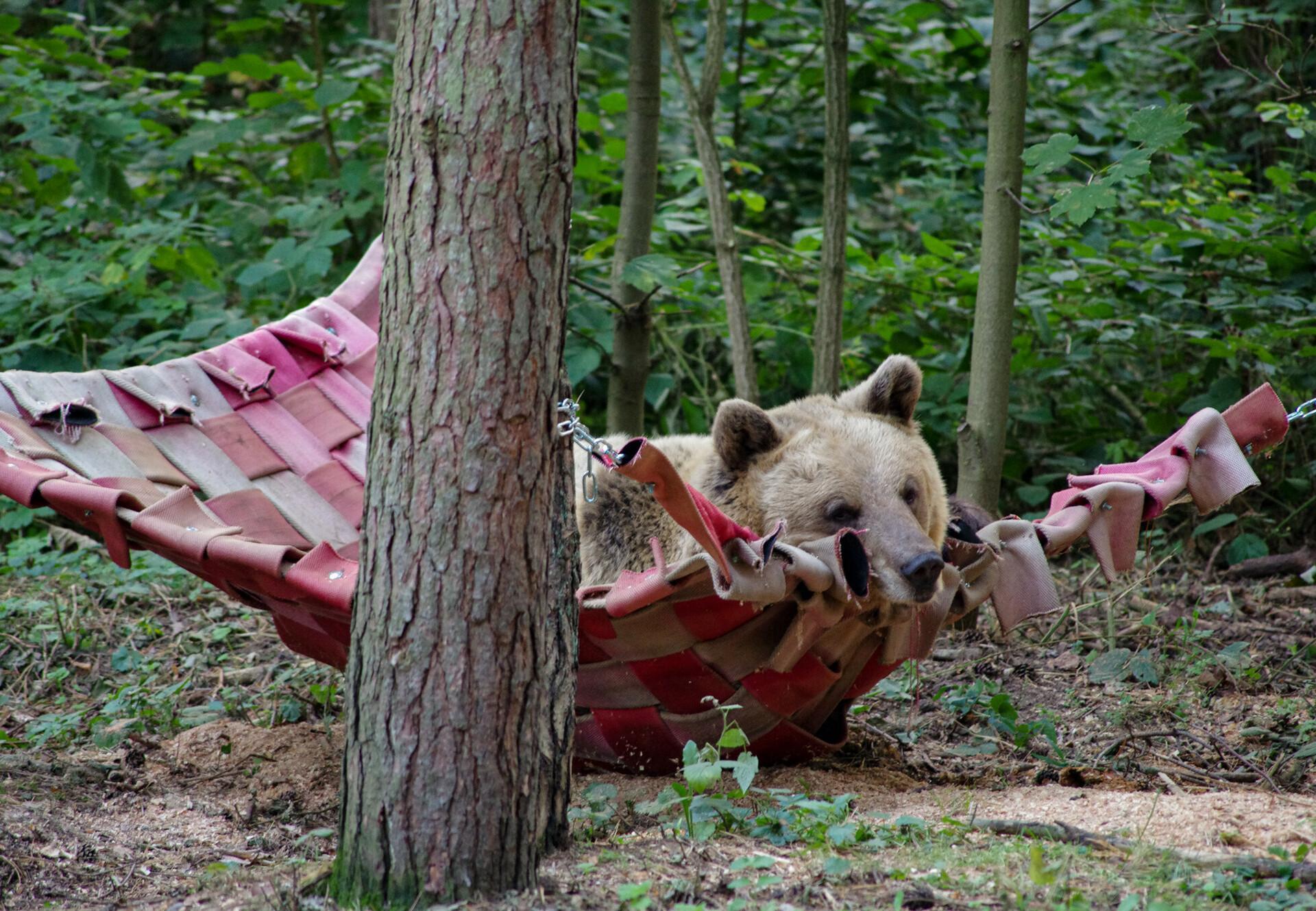 Hinweise zum Bärenbesuch