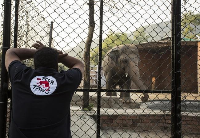 Dr Amir Khalil and elephant Kaavan