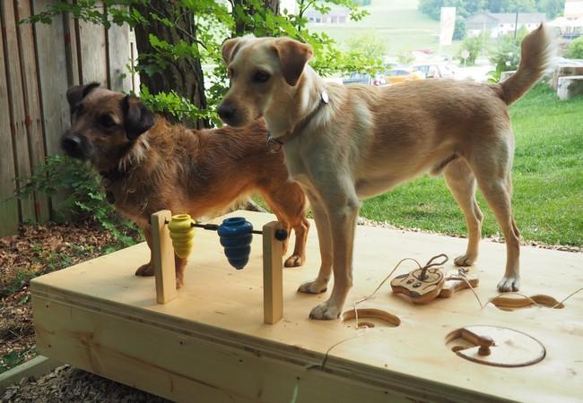 Zwei Hunde bei einem Enrichment schauen gespannt, ob es nicht noch Leckerlis gibt