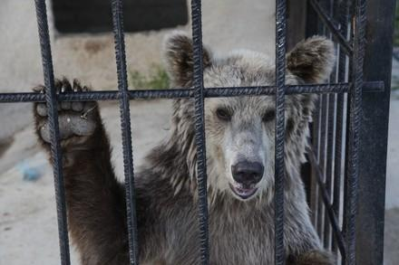 pétition #saddestbears: les ours les plus tristes d'Europe