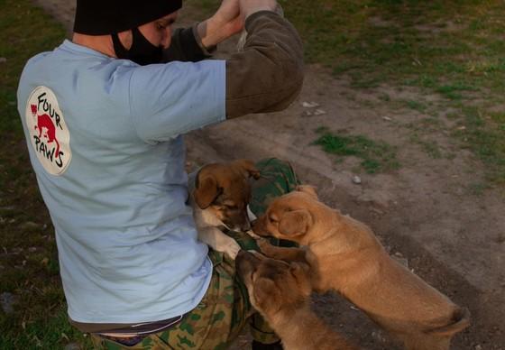 Streunerhunde werden auf den Strassen versorgt