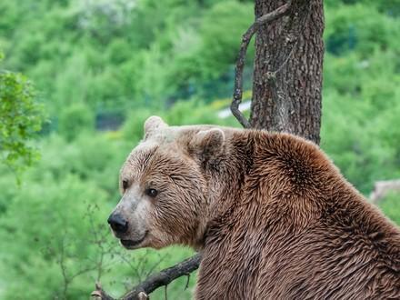 Bear Ero