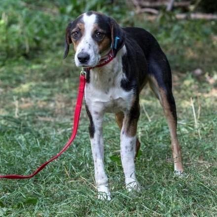 dog-svetlina-grass-red-leash