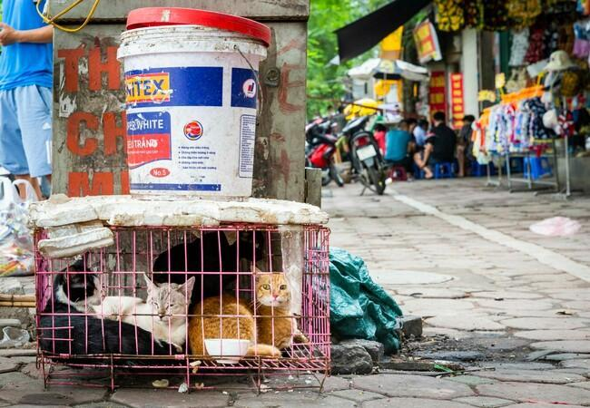 Katzenfleischhandel in Südostasien