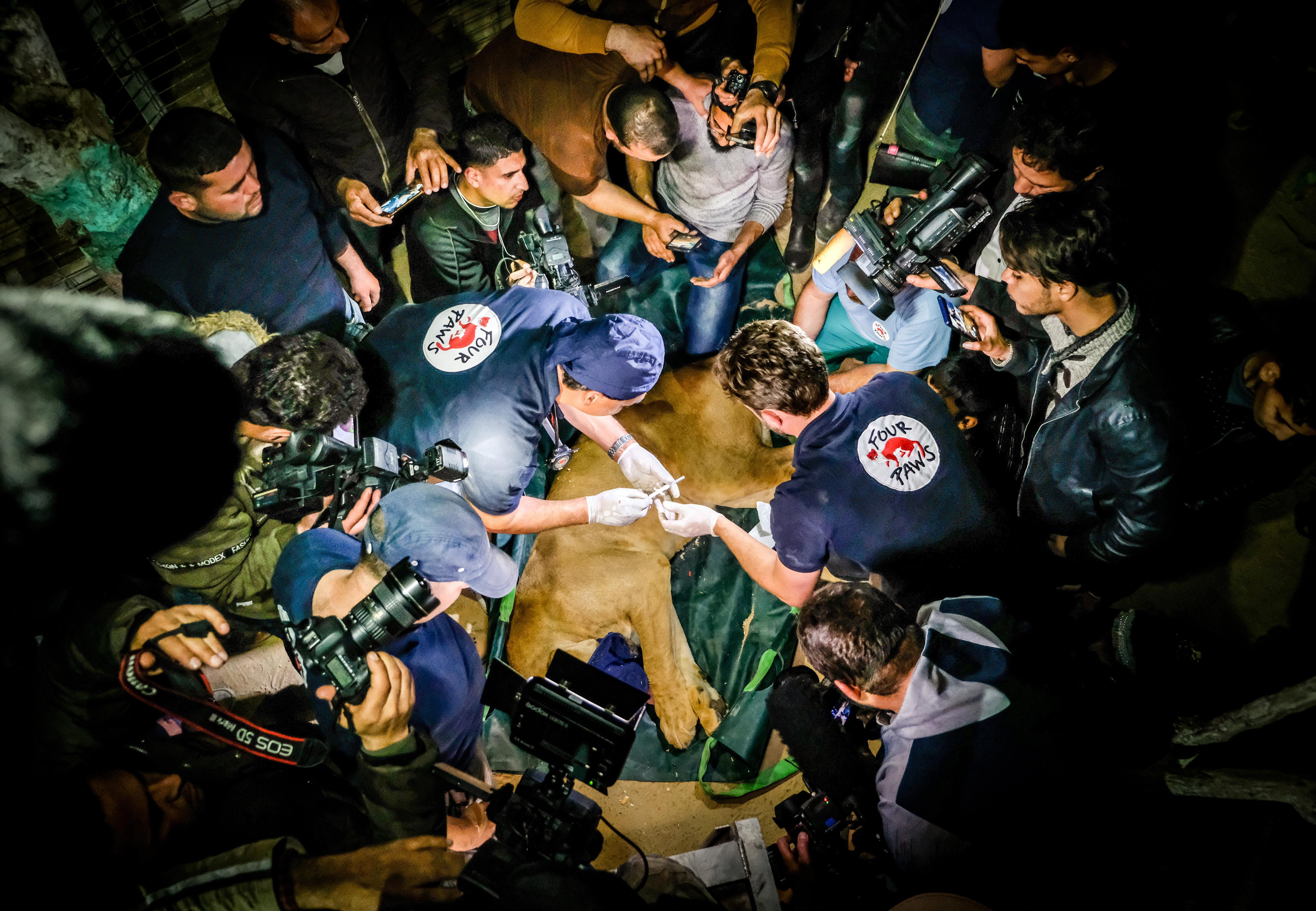 Rescue mission Gaza 2019