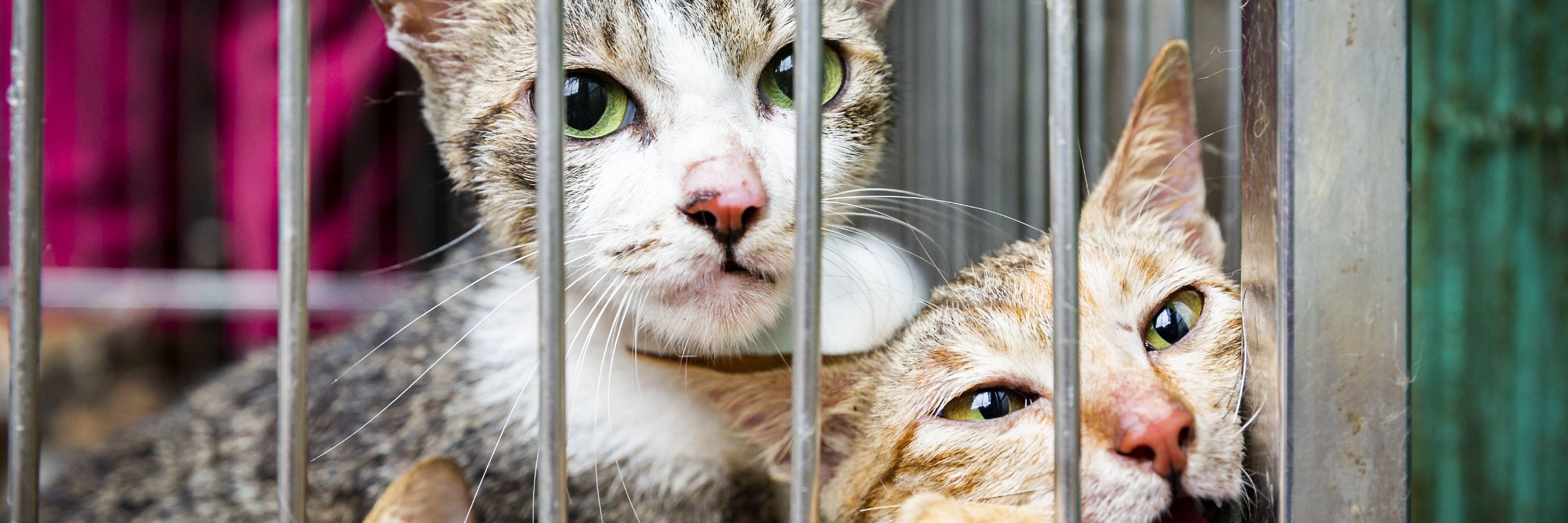 Katten in een kooi