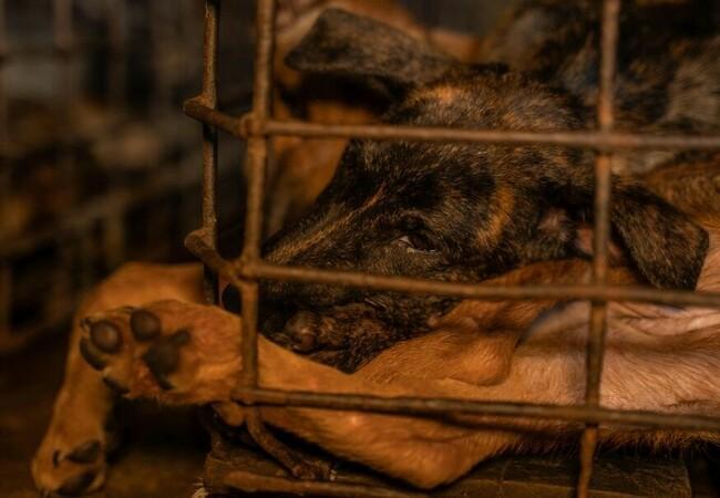 geretteter Hund im Käfig