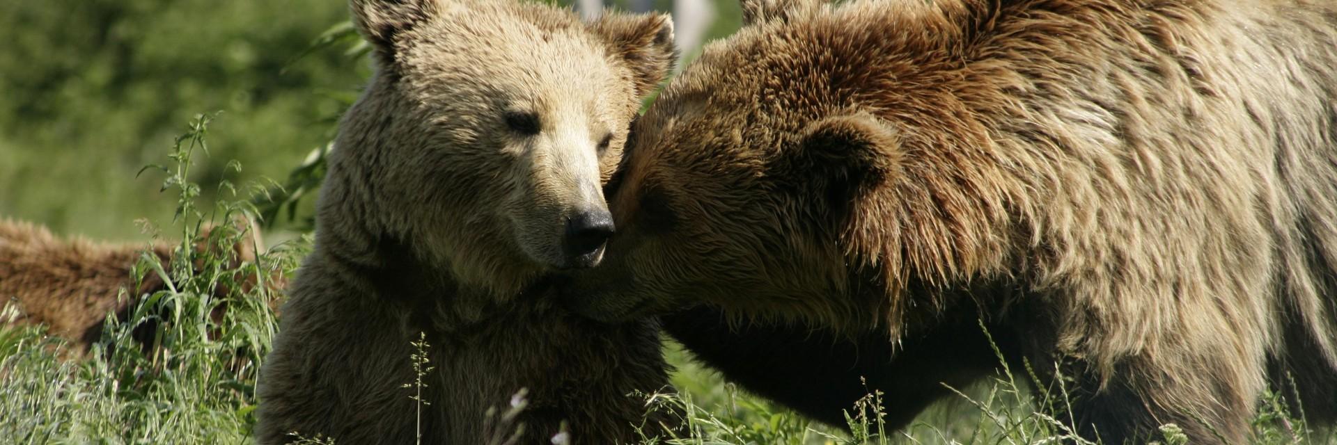 Bears in the sunshine