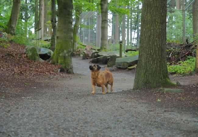Brauner Hund im Wald