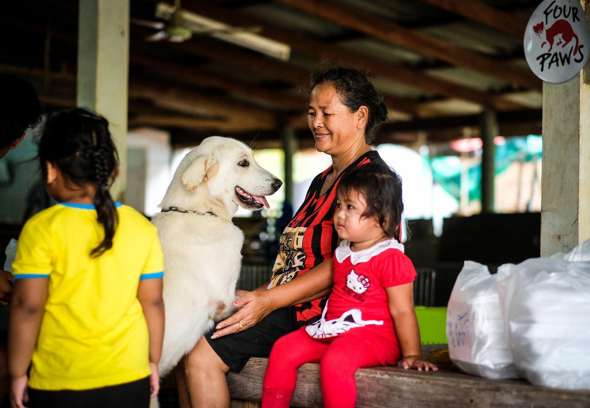 Streunerhilfe in Thailand