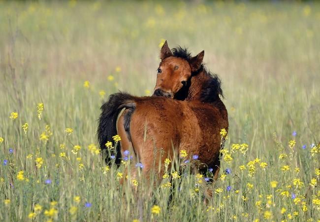 Wild foal in the meadow