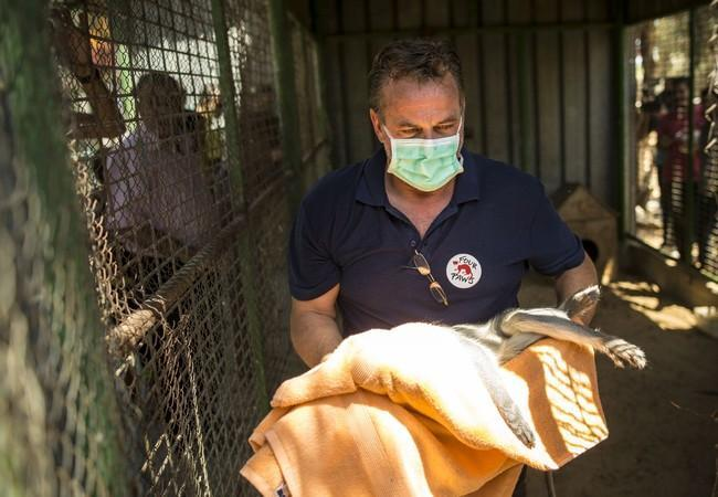 Dr Frank rescuing an animal