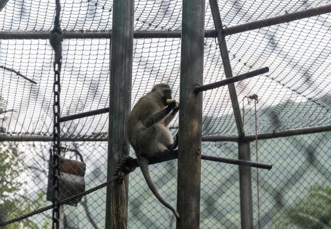 Affen im Gehege