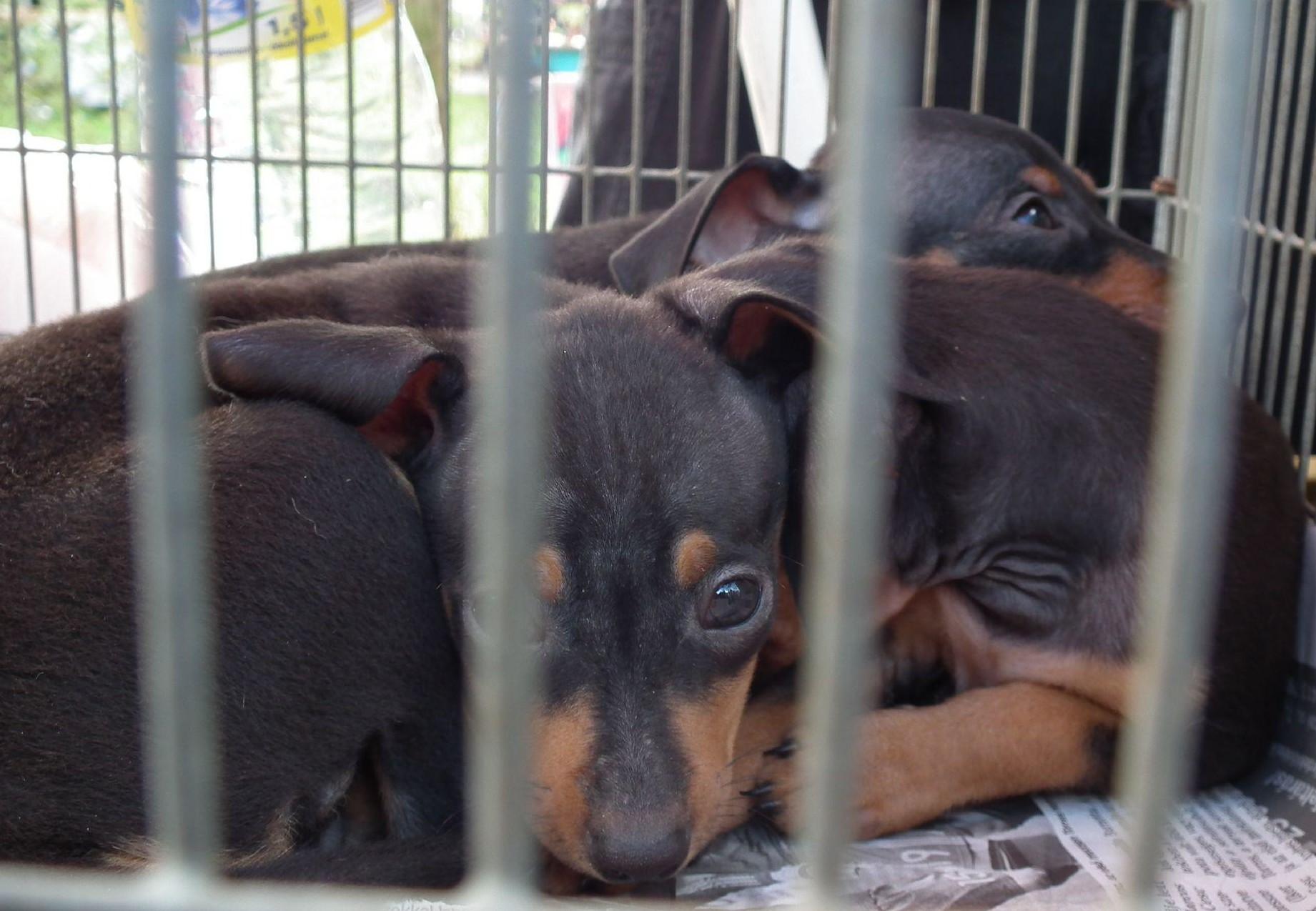 dog-cage-sad-face
