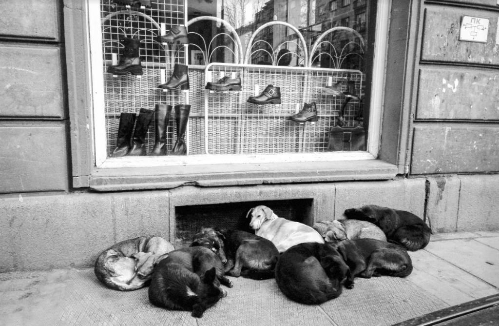 Кучета лежат сгушени