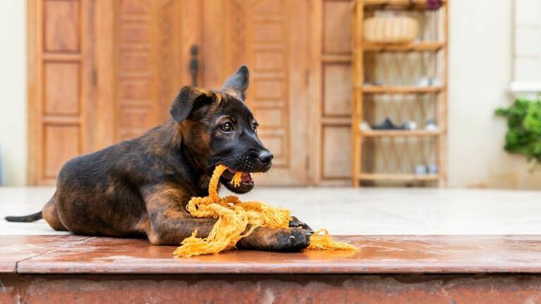 Koop speelgoed voor een geredde hond
