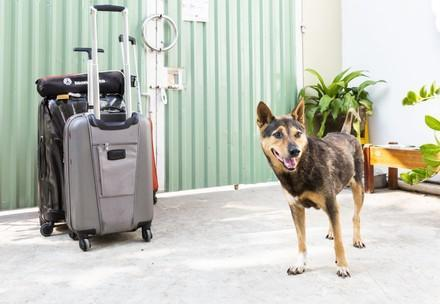 Hund mit Koffern