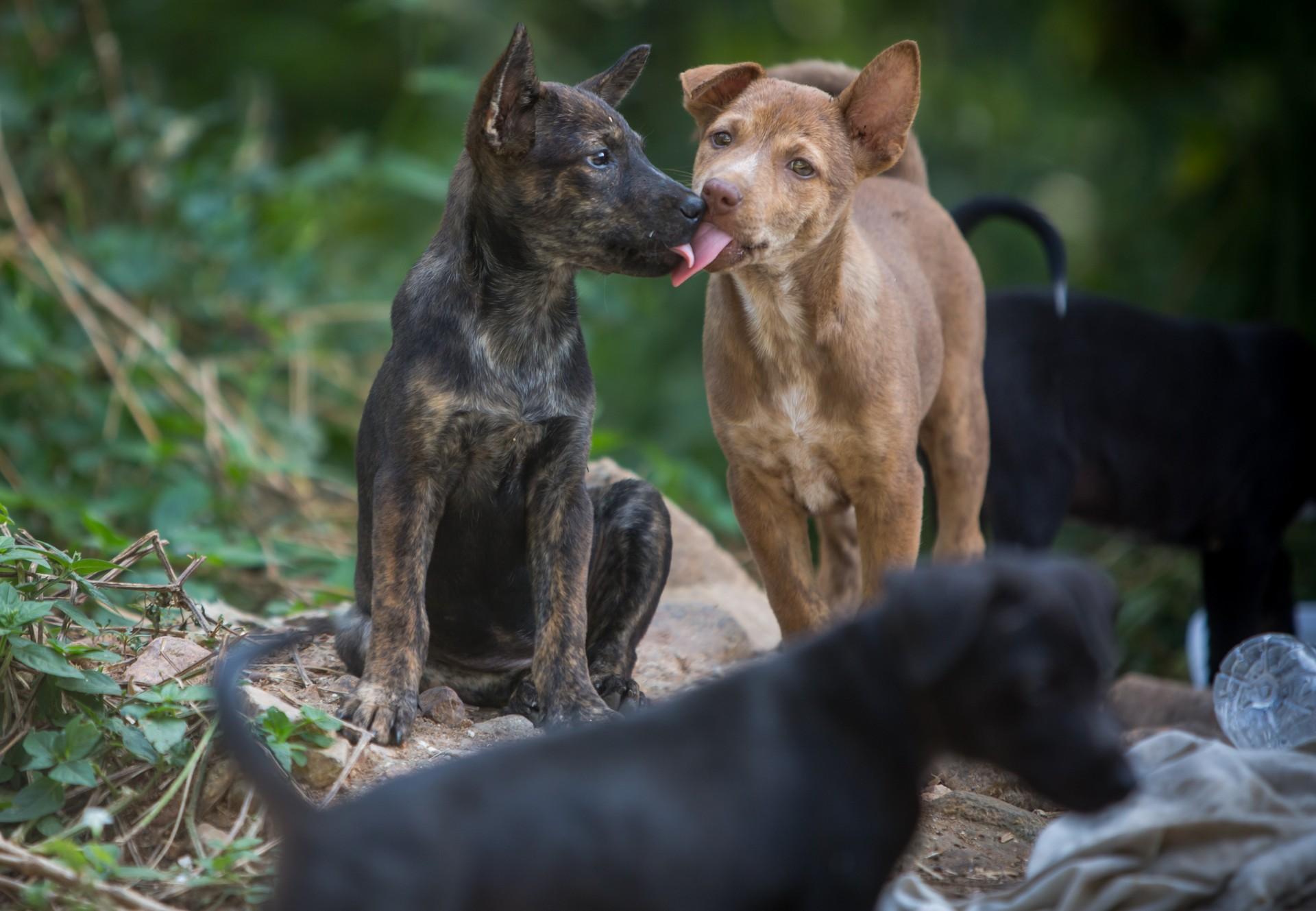 Streunerhunde