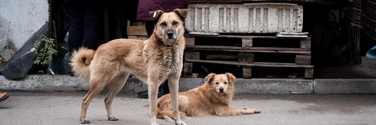 Straßenhunde in Europa