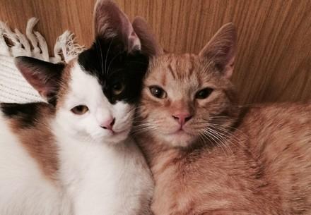 Deuix chats enlacés