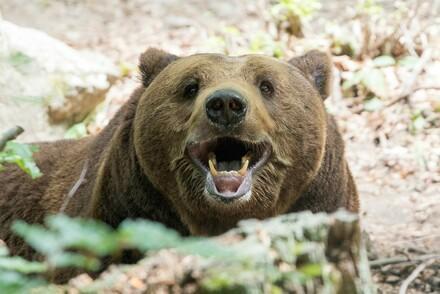 Happy bear Standy