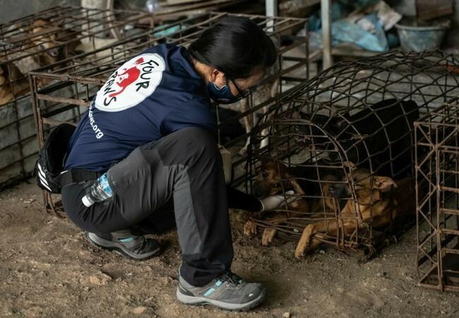 Mitarbeiterin befreit Hunde aus dem Käfig