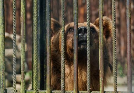 Bear behind bars