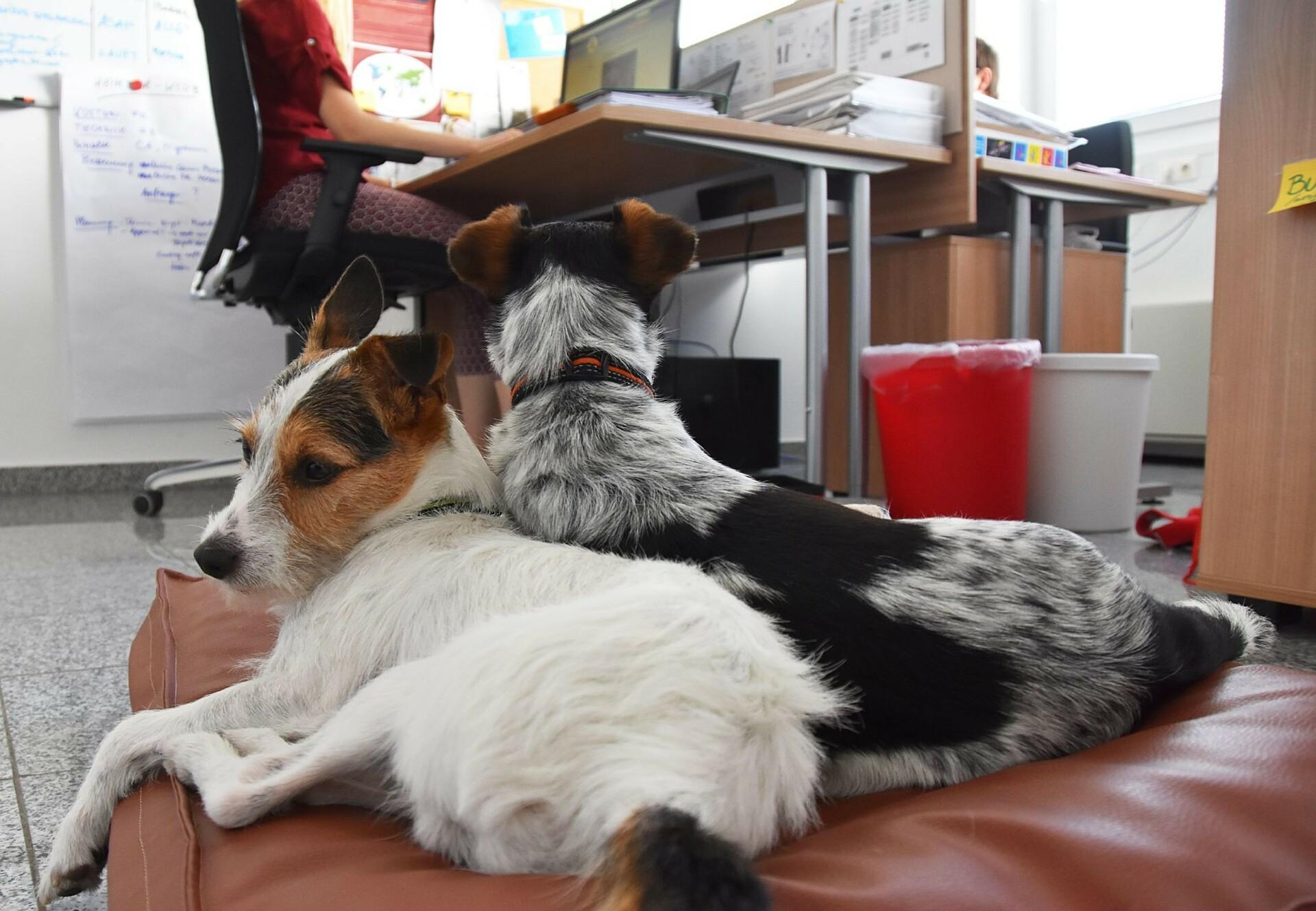 Honden op kantoor