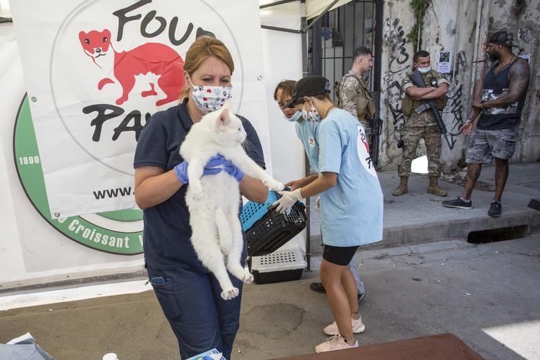 Марина Иванова на помощ на пострадалите животни в Бейрут