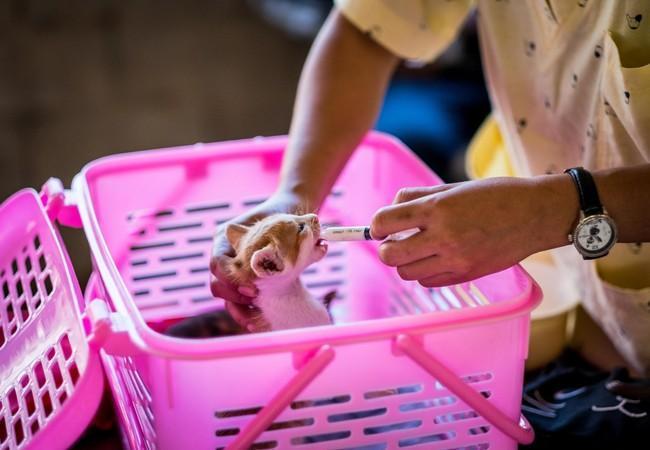 Kitten getting medical help