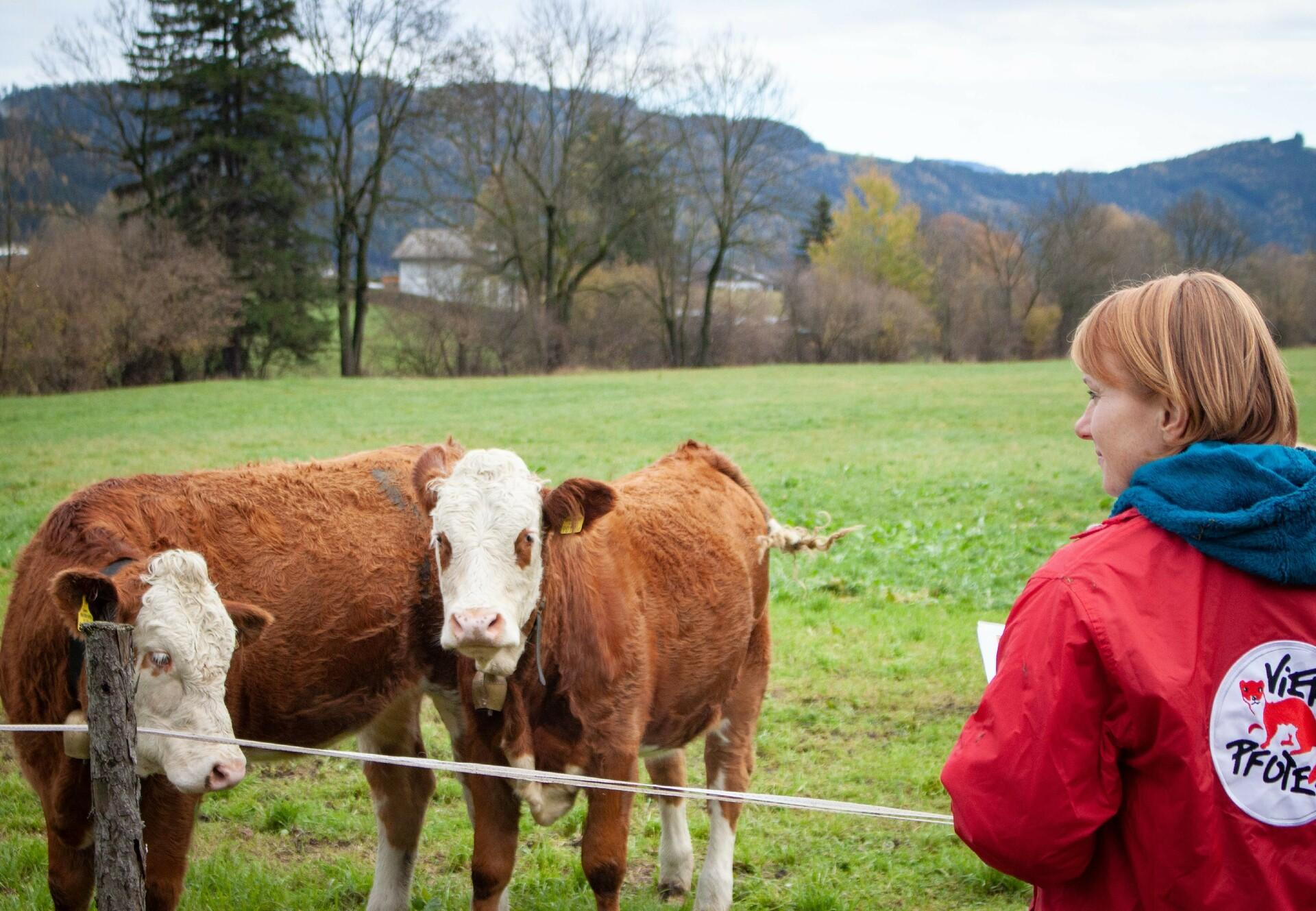 Kühe auf einer grünen Weide. Davor eine Mitarbeierin von VIER PFOTEN