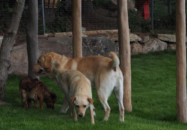 drei Hunde spielen in der Hundezone