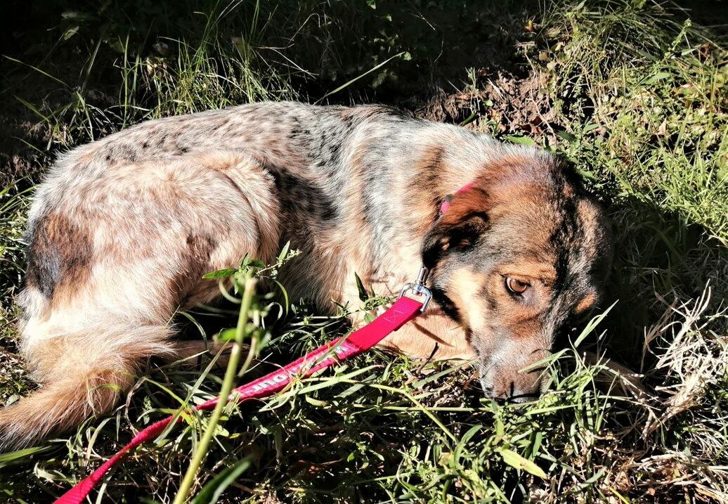 Dog Mruvka | куче Мръвка