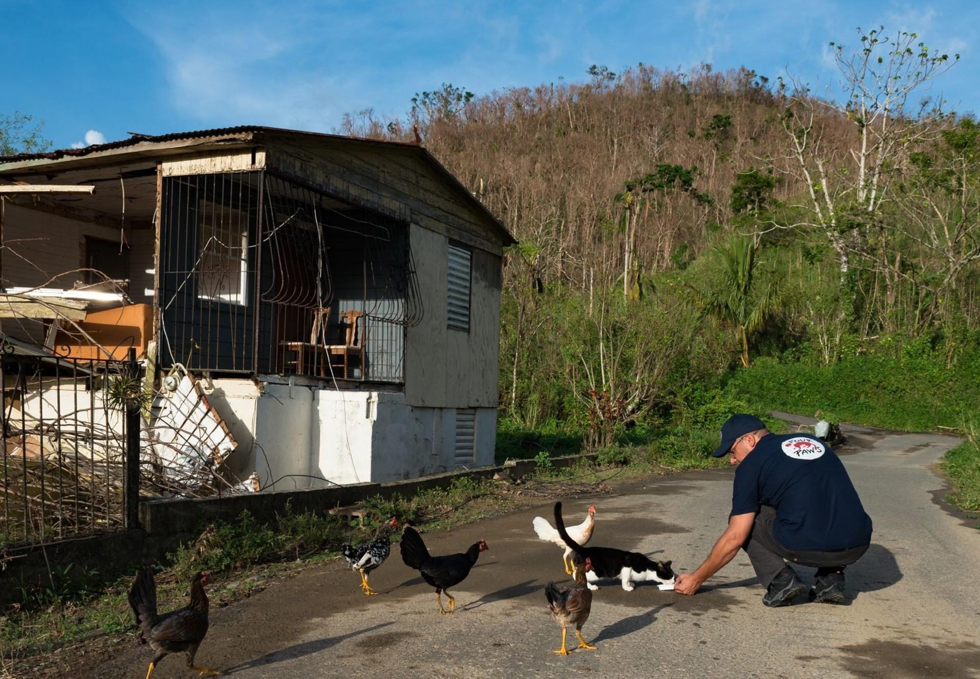 Helping animals following Hurricane Maria, Puerto Rico
