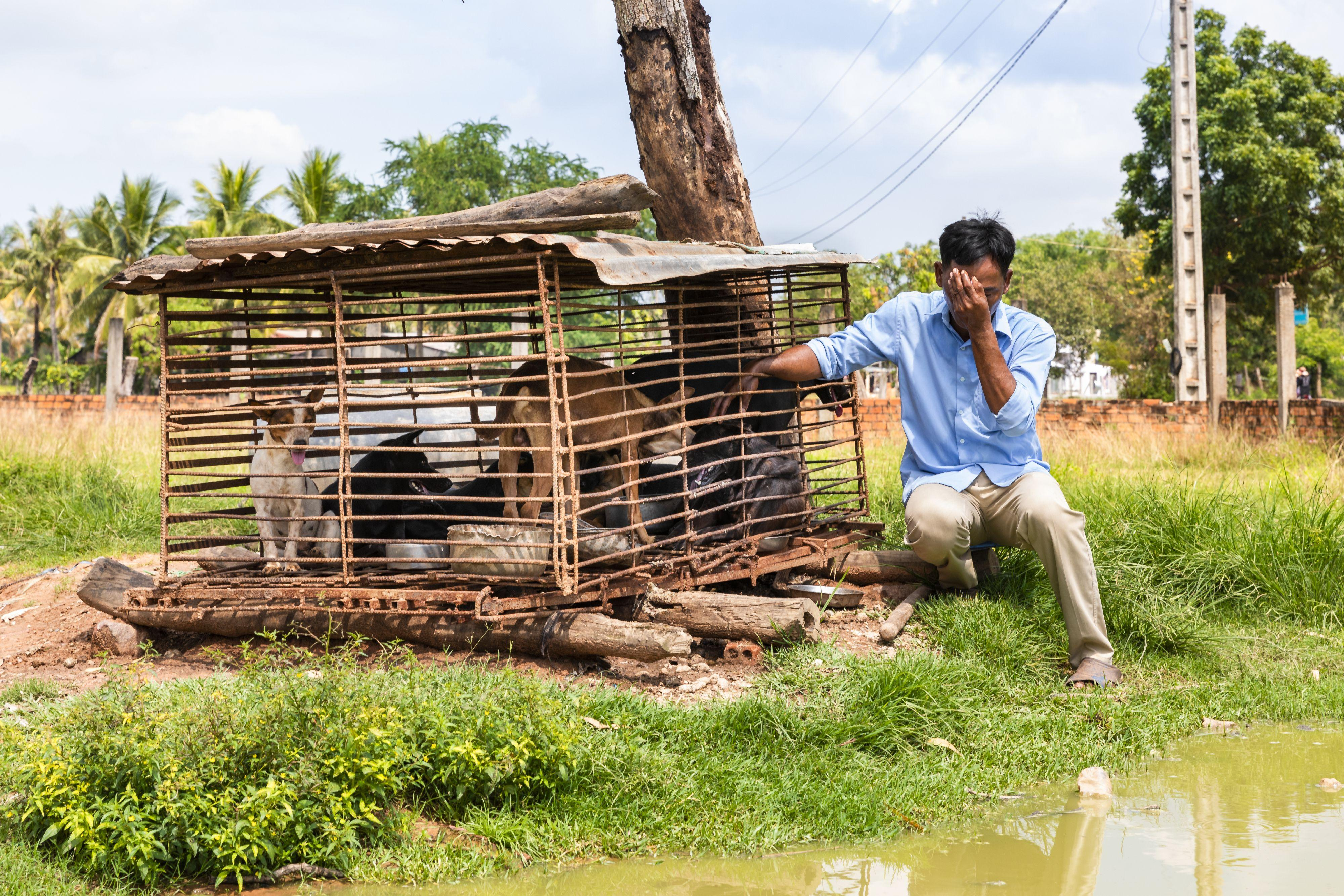 Reddingsactie slachthuis Cambodja