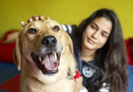 AAI Hund Kaya