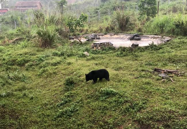 Bär Freddie in Ninh Binh