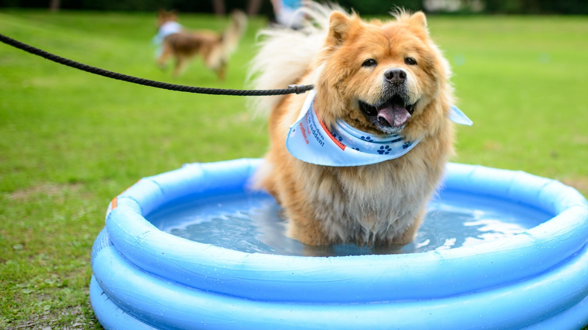 Куче в детския басейн