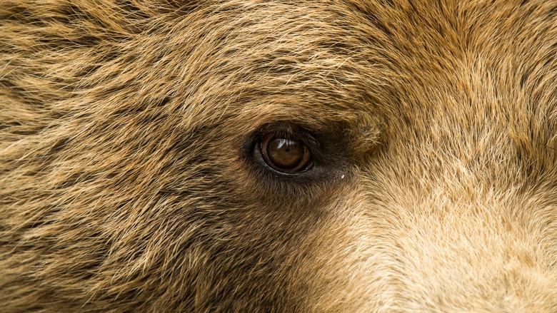 The eye of Bear Meimo
