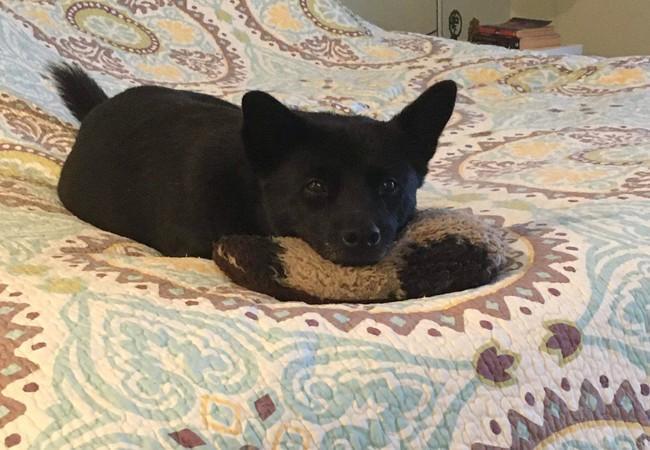 Hund Moo in seinem neuen zu Hause, geniesst sein Leben