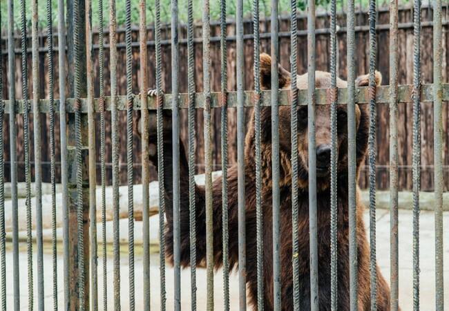 Melanka und Leo werden aus ihrem Käfig gerettet