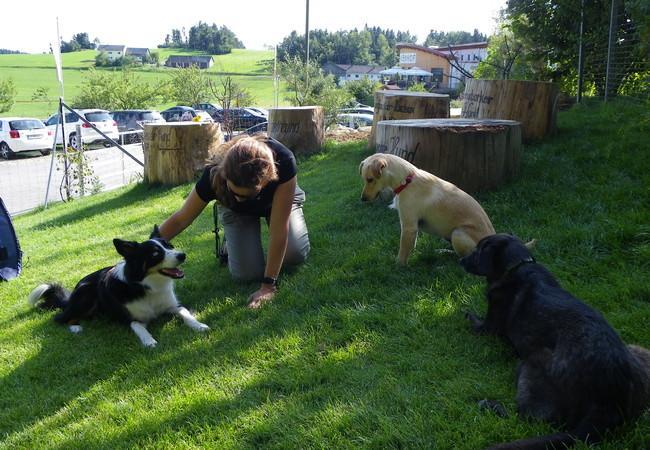 andere Hunde kennen lernen in der Hundezone