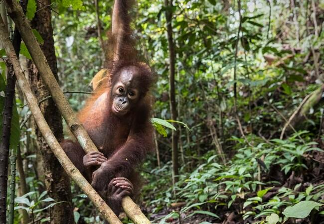 Orphan Kartini in the forest growing up