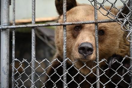 Bär in Albanien hinter Gitter bevor er gerettet wird